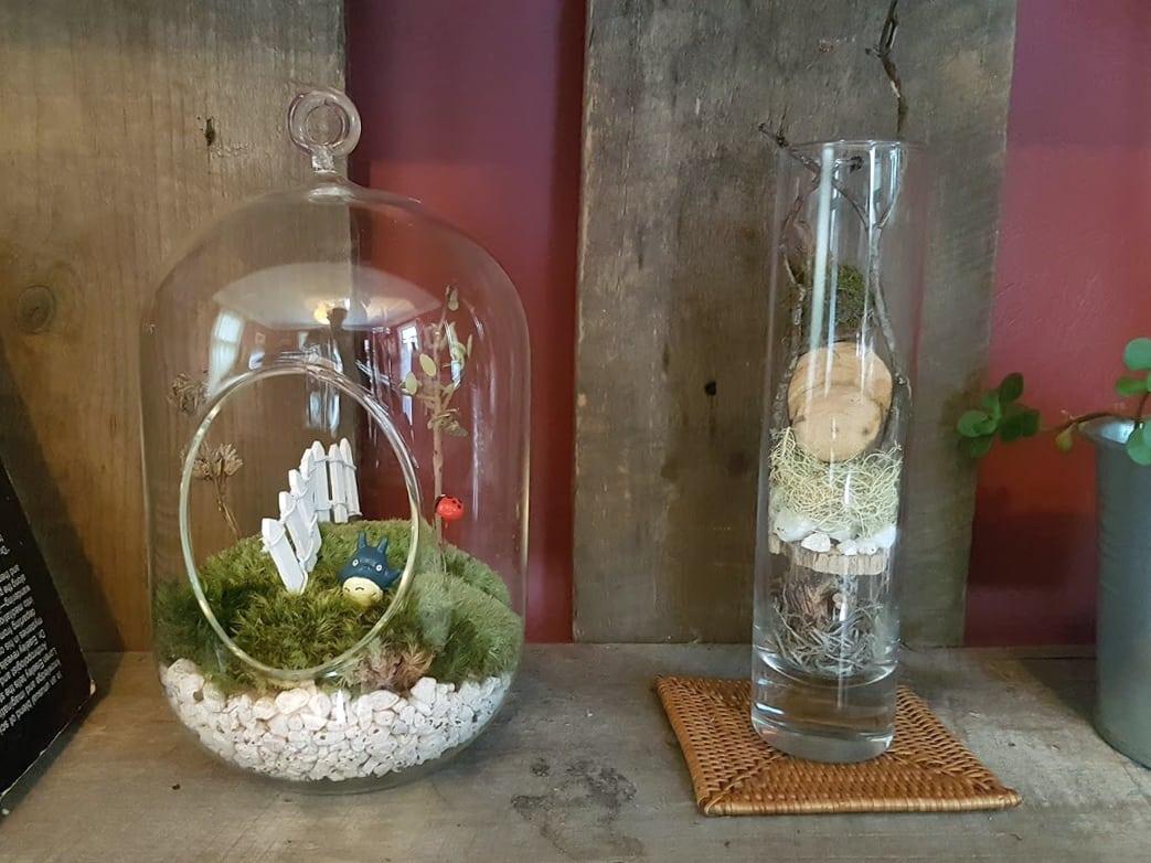 terrarium-display
